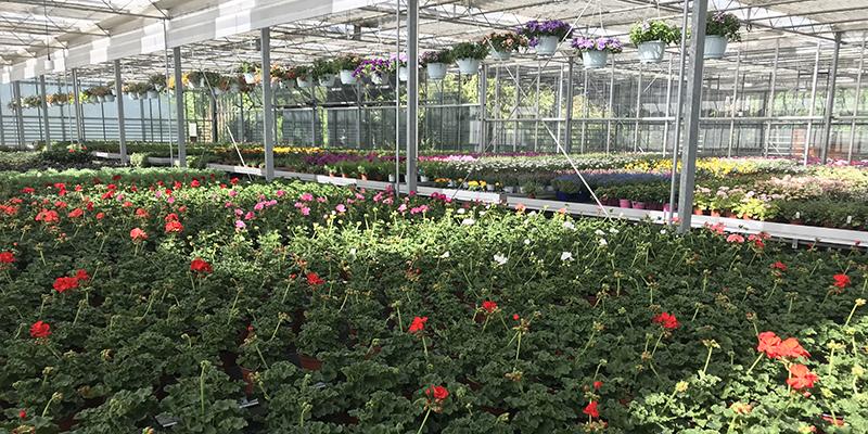 das Bepflanzen Ihrer Balkonkisten die Überwinterung von Kübelpflanzen Mietpflanzen für Hochzeiten, Feiern… Grabbepflanzungen Hydro-Service Dekorationen für Feste, Firmenanlässe… Blumen-Abonnemente